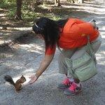 Feeding the wild squirrel