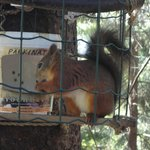 Feeding home for the wild squirrel as maintance by some animal lover
