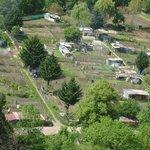 view onto allotment gardens