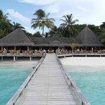 The laguna bar