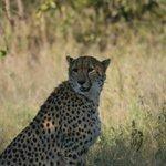 View on Safari