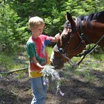 Feeding horses on trail ride