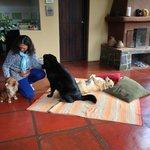 Husets 3 hunde. Hvor mange hunde kan prale af at have eget tæppe med store puder foran kaminen!!
