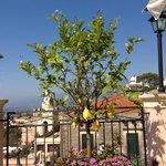 Terrasse mit Zitronenbauemchen