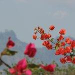 The Uluguru mountains provide a beautiful backdrop to the farm