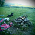dog enjoying the great outdoors