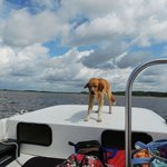 This dog knows to get down when a boat goes by.