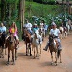 Cavalos, fazendinha, animais é a vida na natureza (70826228)