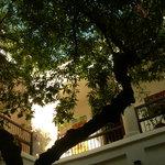 Photo de la végétation du patio