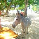 wild donkey at the hut