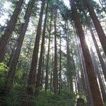 the beautiful forest of the pacific northwest