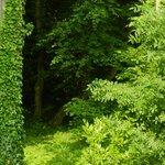 Photo de Le Parc du Chateau