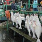 The very fresh catch