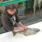 Preparing the fish - a Halibut is worked on