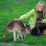Stroking a kangaroo from the island