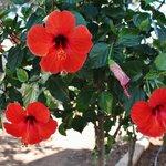 Flowers från the gardn