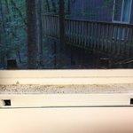 Dusty windows