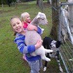 Holding the animals