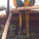 2 parrots relaxing