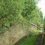 tree across tracks