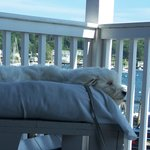from our deck; dog loved the ocean breeze