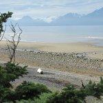 Kachemak Bay beach