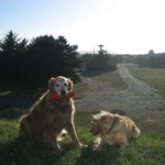 My goldens outside the Pacific Reef Resort in Gold Beach