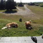My goldens outside our room in Gold Beach