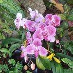 Bellas orquideas del jardin