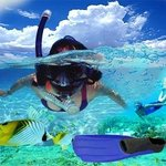 Coconut Reef Power Boat & Snorkelling Tours