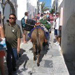 Donkey carrying our luggage!!!