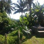 The garden next to the mud hut