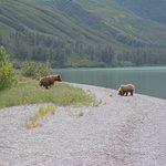 Crescant Lake bears