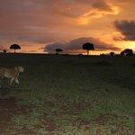 empieza el safari nocturno con una puesta