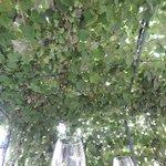 Blanket of vines overhead