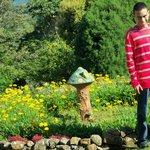 garden and mushroom