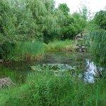 Cour arrière, près de l'étang (endroit paisible pour relaxer)