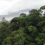 El Copal Reserve