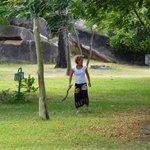 Baboon chasing