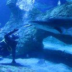 Shark Feeding