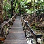 bridge up to the lodge