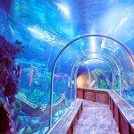 Tunel de Tiburones
