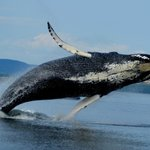 Meet the world's most fascinating and majestic creatures.