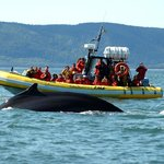 Wildlife adventure aboard one of our zodiacs !  An experience for lovers of intense emotions.