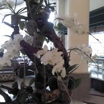 fresh orchid at hotel lobby