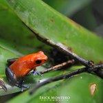 El ranario permite estar muy cerca de especies poco comunes