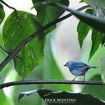 Por todas partes se observan bellas aves.