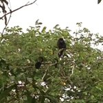howler monkeys from our excursion