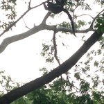 howler monkey from our excursion