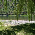 Shady Willows at campground edge